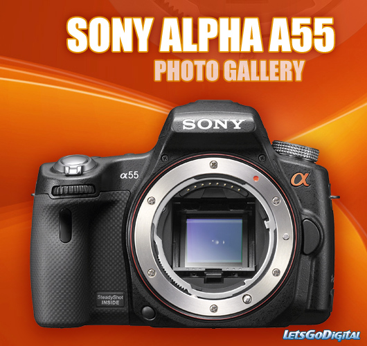 sony-alpha-55-photo-gallery.jpg